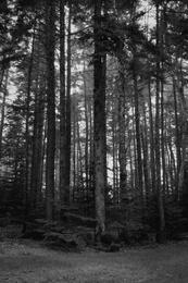 Cobscook Woods
