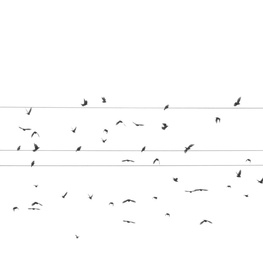 Birds, Rock