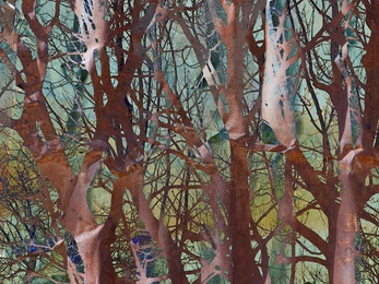Rusty Forest