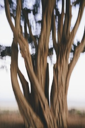 Cypress Tree Abstract II