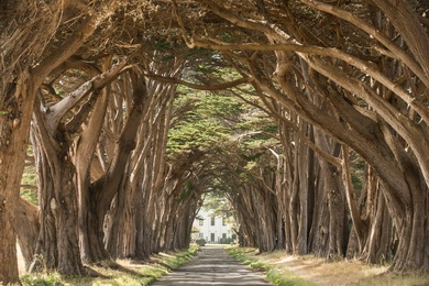 Cypress Tree Tunnel 1