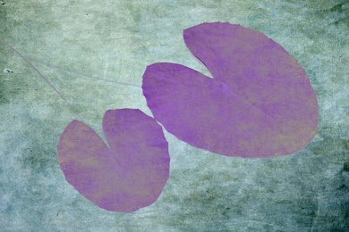 Topical Water Lily
