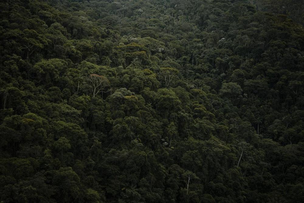 Arboreal
