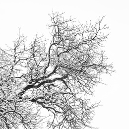 Winter's Edge I