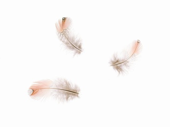 Feathers #8