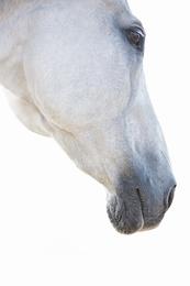 White Horse 04