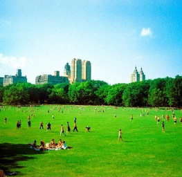 Central Park Meadows Summer Time