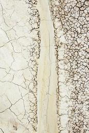 Fossil Site Study XXVII