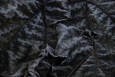 Winter Leaves #3