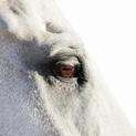 Horse Eye 03