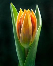 Macro Flower 23