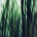 Alder Forest Abstract IV