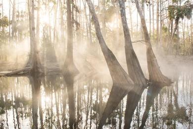 Fisheater Creek Fog