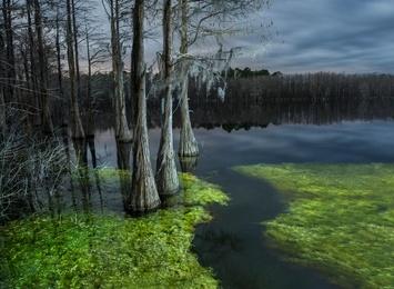 Flooded Cypress #2
