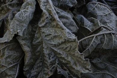 Winter Leaves #5