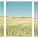 Midday Palouse Triptych