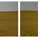 Amber Waves Diptych