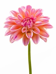 Macro Flower 5