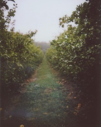 Orchard Row