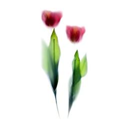 Flora Impressions