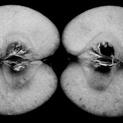 Symmetry of White Flesh