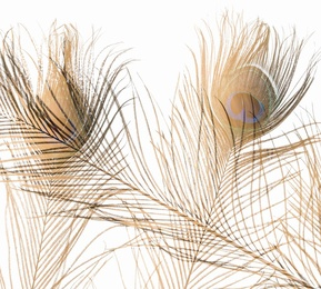 Feathers #23