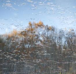 Reflection 11