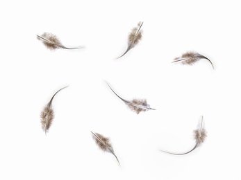 Feathers #13