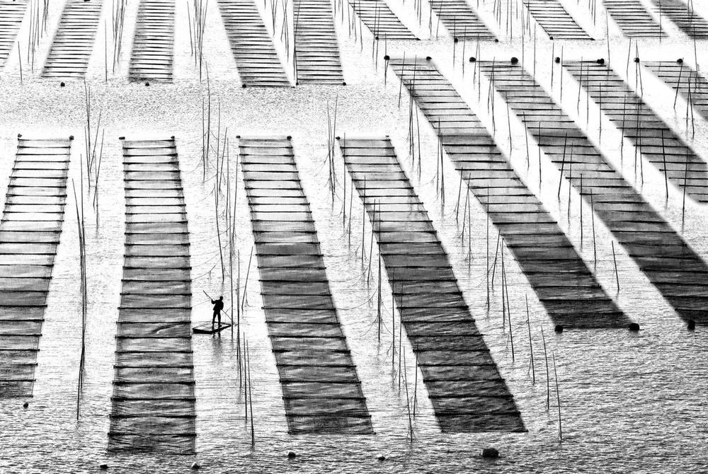 Lines.Wavy