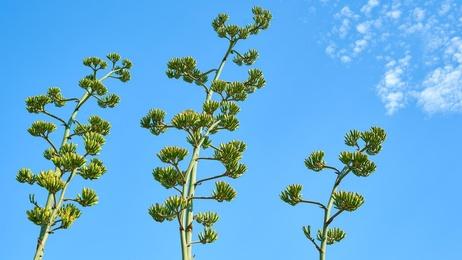Topanga Plants - Malibu