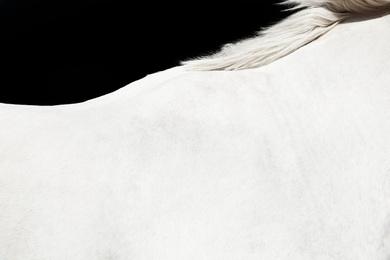 White Horse on Black 02