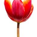 Macro Flower 3