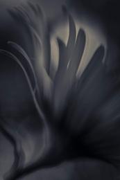 Dark Flower 1