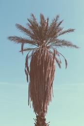 Palm Study IV