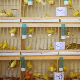Marché Aux Oiseaux I