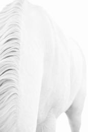 White Horse 10