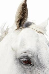 Horse Eye 02