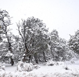 Snow Days #2