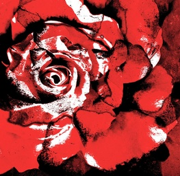 Red Black Rose