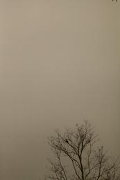 Mist and Bird 2