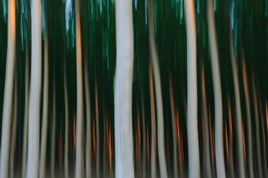 Tree Farm XVIII