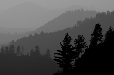Sequoia Overlook