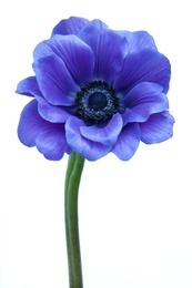 Macro Flower 21