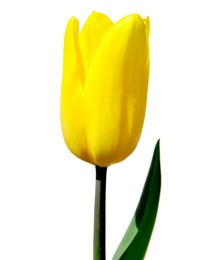 Macro Flower 14