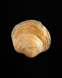 Shell #2