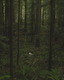 Lost in the Woods II