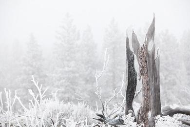 Shevlin Park Freezing Fog Study 1