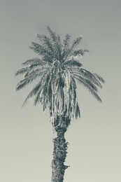 Palm Study I
