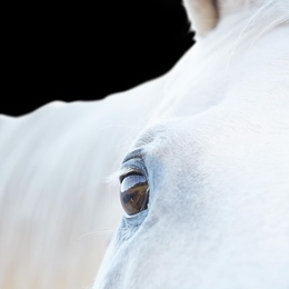 White Horse 05