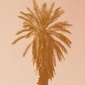 Palm Study III